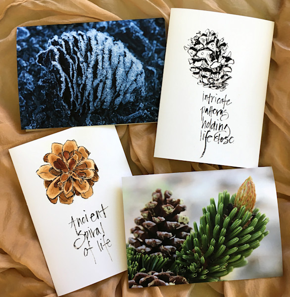 Pinecones: A Collaboration