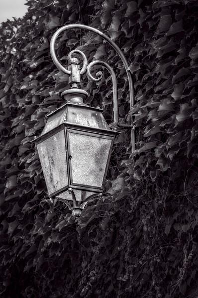Ivy Wall Antique Lamp Lantern Light|Wall Decor fleblanc