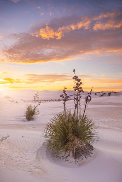 deserts-white-sands-sunset-vertical