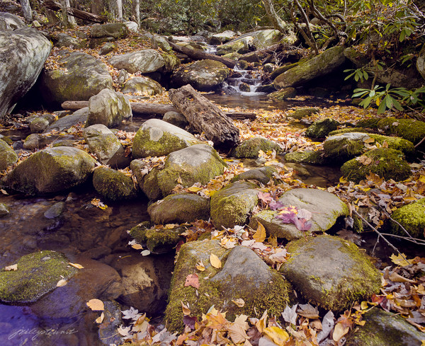 Autumn Leaves and Stream by J. Riley Stewart