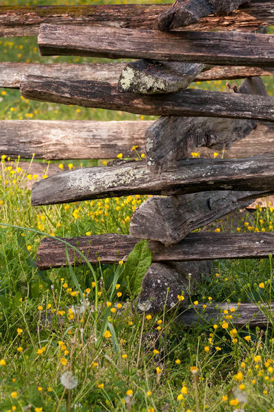 Countryside Wall Art: Colonial Fence & Wildflowers