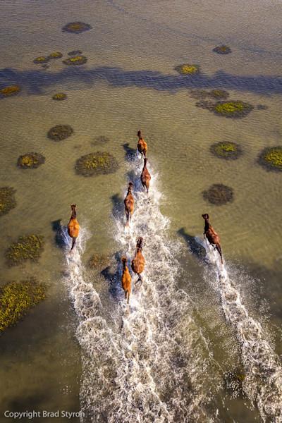 Wild Horse Photographs by Brad Styron