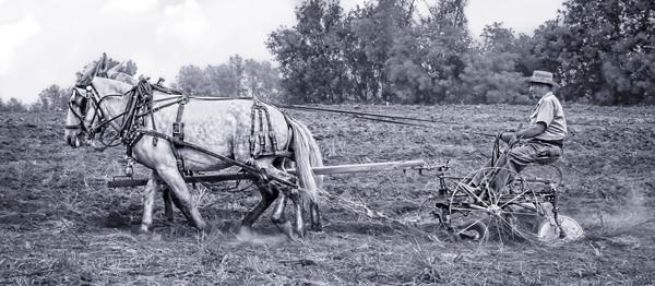 Mule Team Vintage Plowing Farm Plow|Wall Decor fleblanc