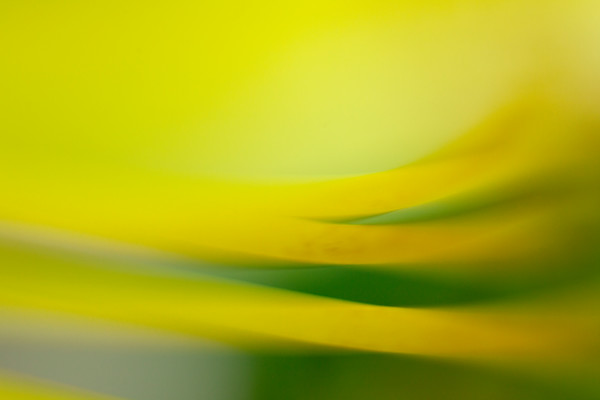 Abstract Flower #11 Botanical Photography