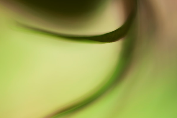 Abstract Floral in Green Botanical Photography