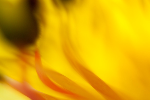 Abstract Flower and Abstract Botanical photographs for sale