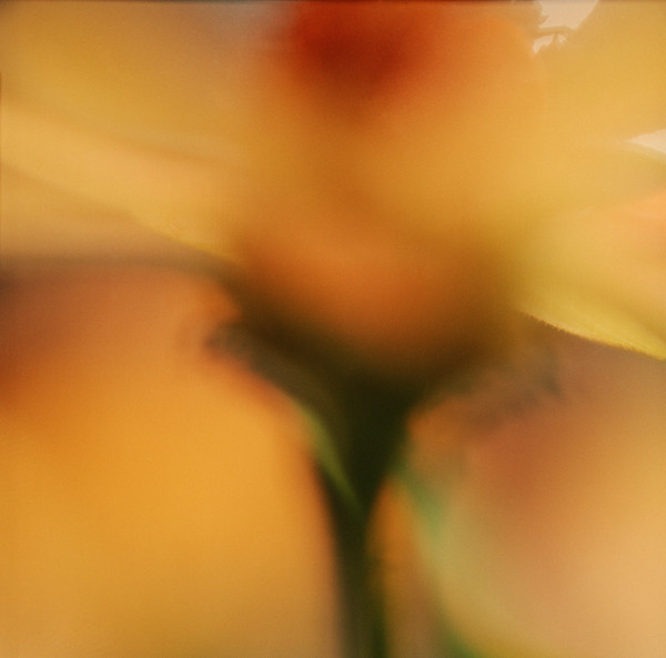 Abstract Flower #12 Botanical Photography
