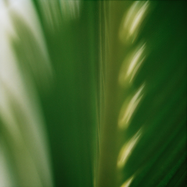 abstract-floral-123 Botanical Photography