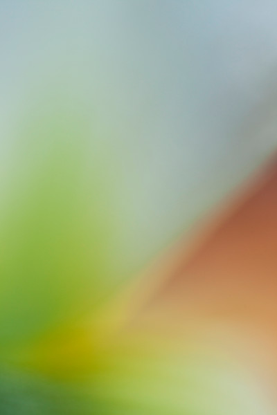 abstract-floral-14 Botanical Photography