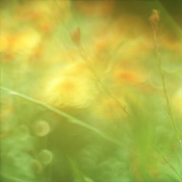 floral-68