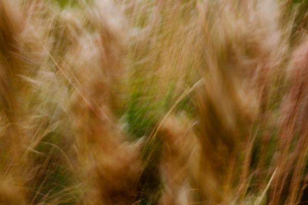 na-grass