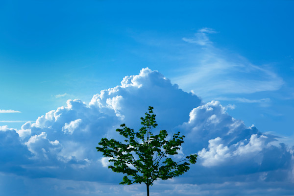 Cloud Mountain with Tree