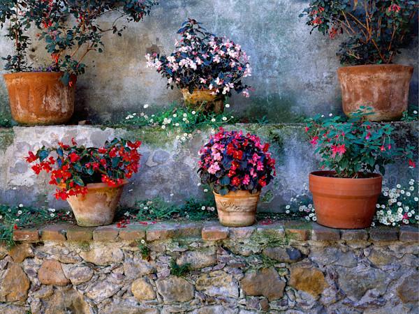 Courtyard Flowerpots