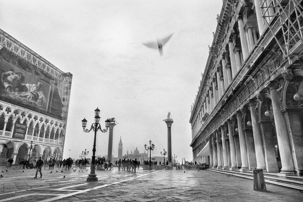 Bird Over Piazza San Marco, Venice, Italy