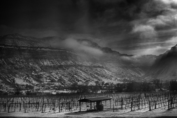 Colorado Rockies Winter Vineyard