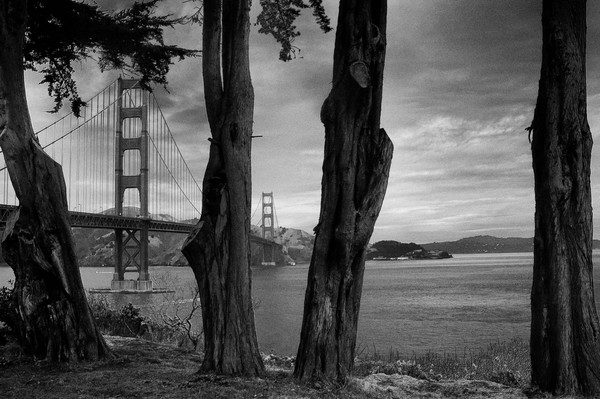 Golden Gate Bridge Through the Trees