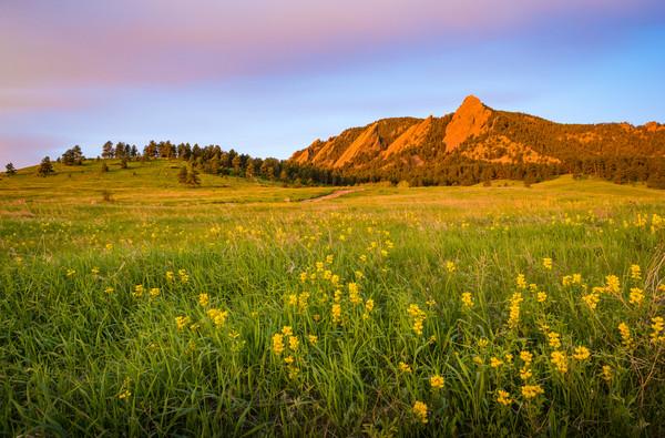 Landscape Photo of Boulder Flatirons Sunrise - Field of Yellow Wildflowers