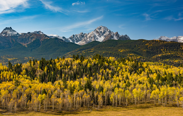 Buy Mt Sneffels Colorado Photography Prints & Strands of Aspen Trees in Fall
