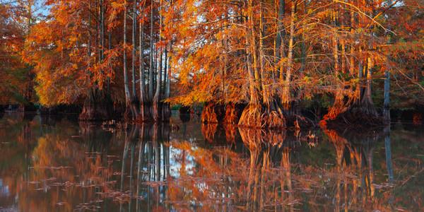 Autumn Cypress Reflections