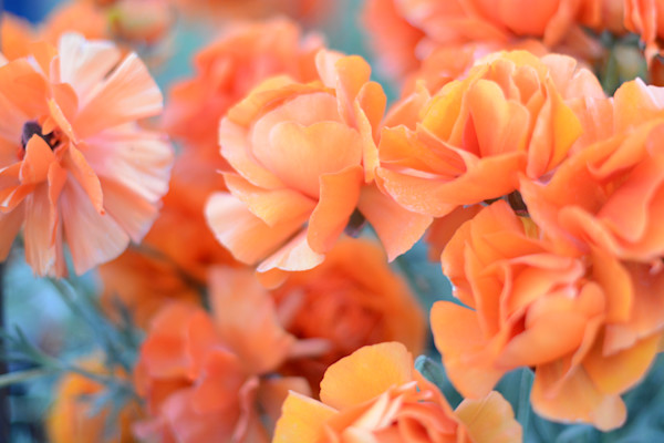 Orange Sherbert by Michele Taras | SavvyArt Market photograph