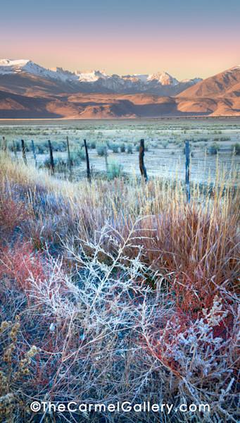 Autumn Frost Eastern Sierra
