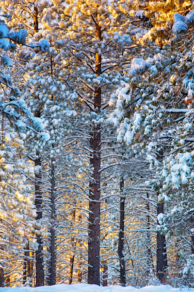 Oregon Snowscapes Photographs for Sale as Fine Art Prints