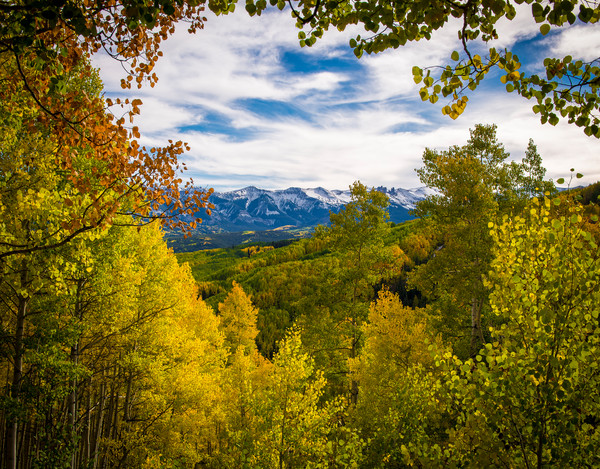 The West Elk Wilderness & Fall Colors of Colorado Aspen Trees