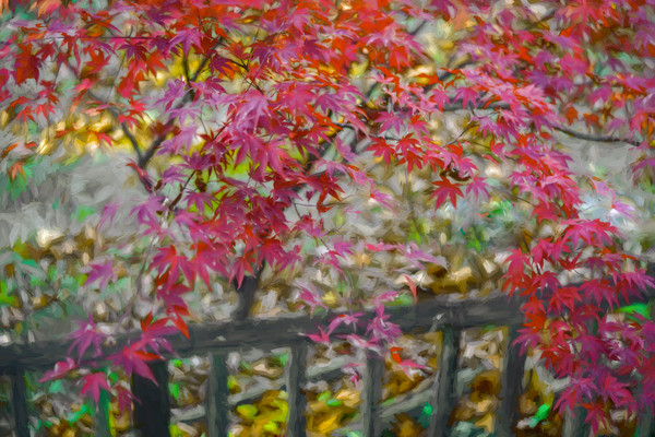 Fall Color Nature Maple Red Leaves Decor|Wall Decor fleblanc