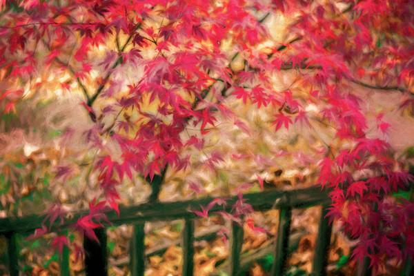 Fall Color Maple Red Leaves Porch Decor|Wall Decor fleblanc