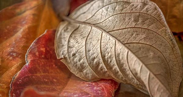Fall Color Foliage Nature Macro Closeup|Wall Decor fleblanc