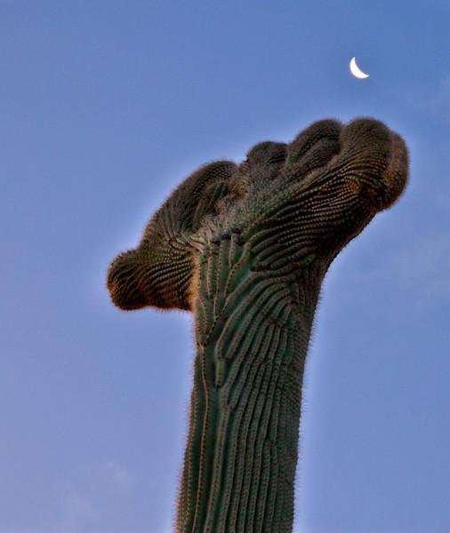 arizona new mexico