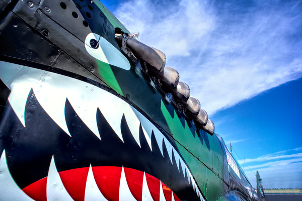 Curtiss P-40  Flying Tigers Shark Closeup|Wall Decor fleblanc