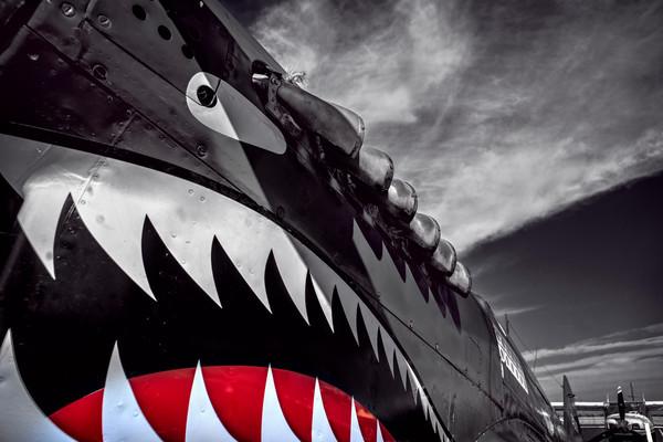 Curtiss P-40 Shark Flying Tigers Closeup|Wall Decor fleblanc