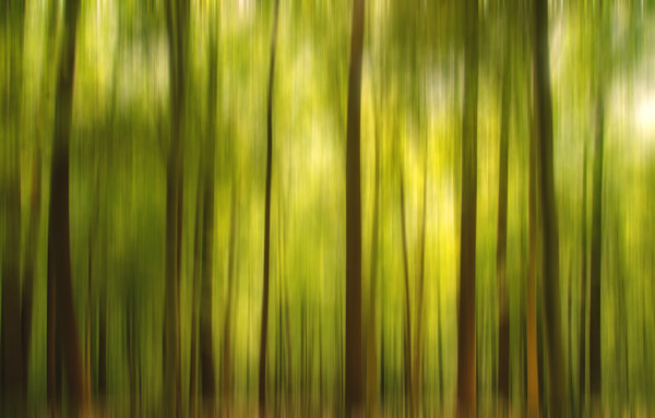 Warmth of the Forests Colors Landscape Photo Wall Art
