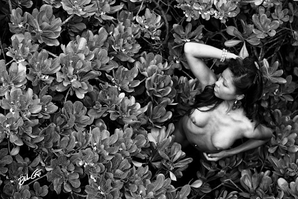 Mangrove Nude