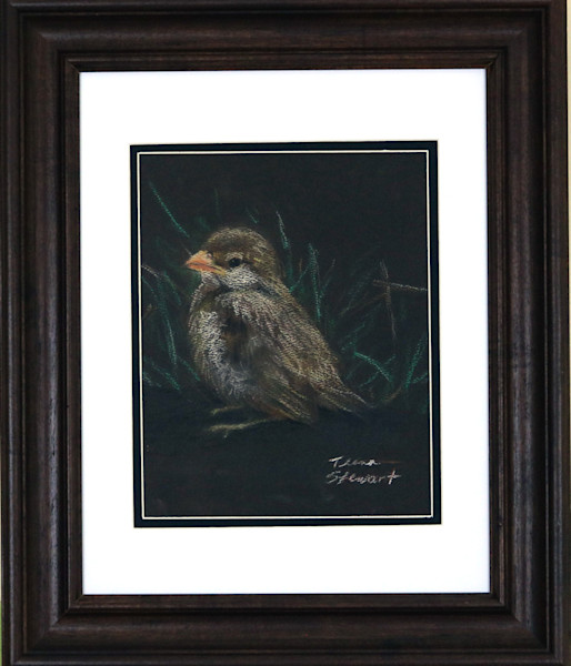 Baby Sparrow, sparrow pastel drawing, art for sale by Teena Stewart