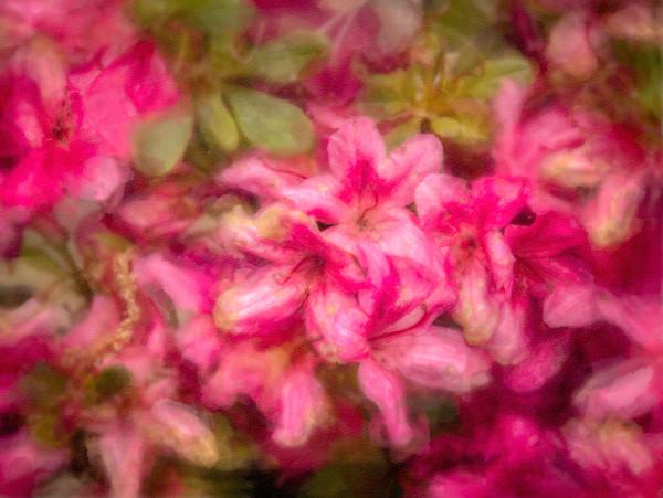 Flower Graceful Greeting Fragrant Wall Decor fleblanc