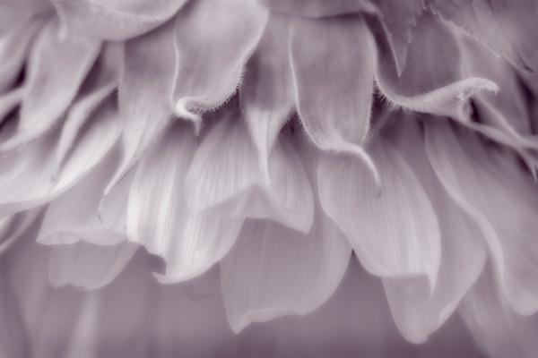 Classic Garden Bouquet Monochrome Wall Decor fleblanc