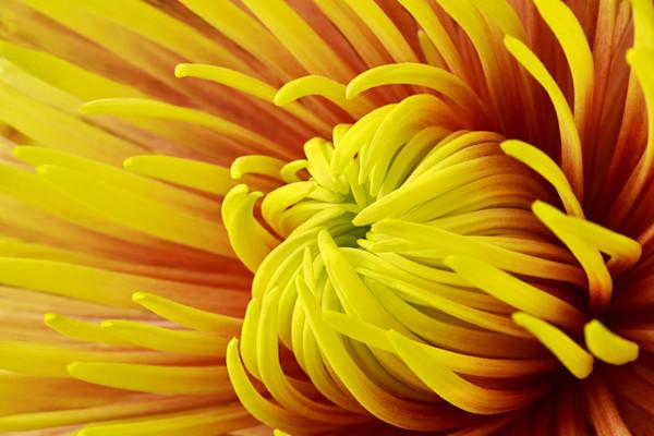 Reaching Photograph of a Flower | Susan Michal Fine Art