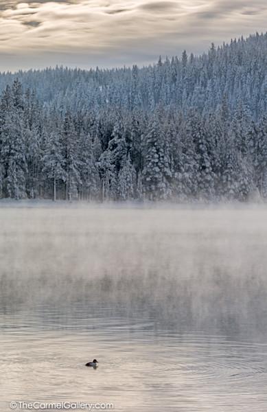 Donner Lake Mist