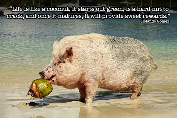 Coconut Life