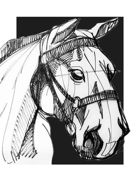 Horse Portrait balck and white