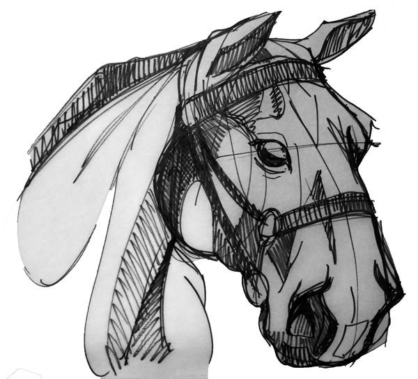 White and black equestrian portraiture