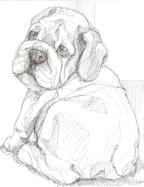 Bulldog portrait, pet drawing