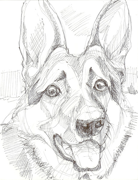 German Shepard drawing