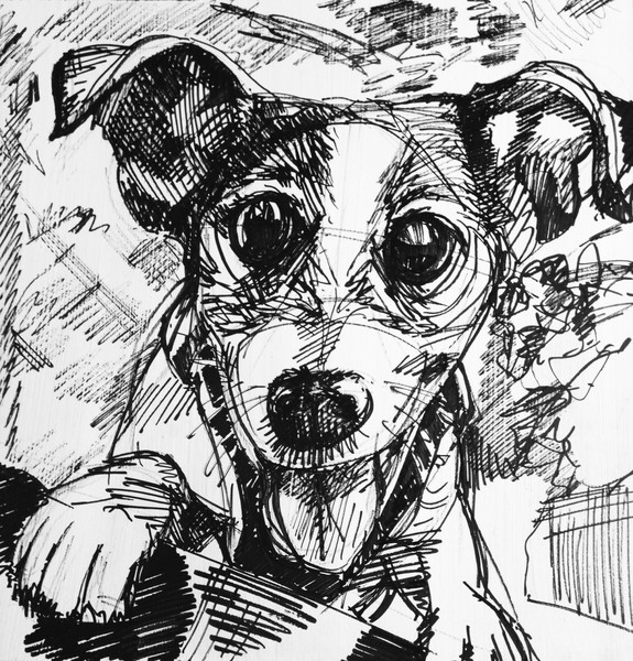 Jack Russell terrier art drawing