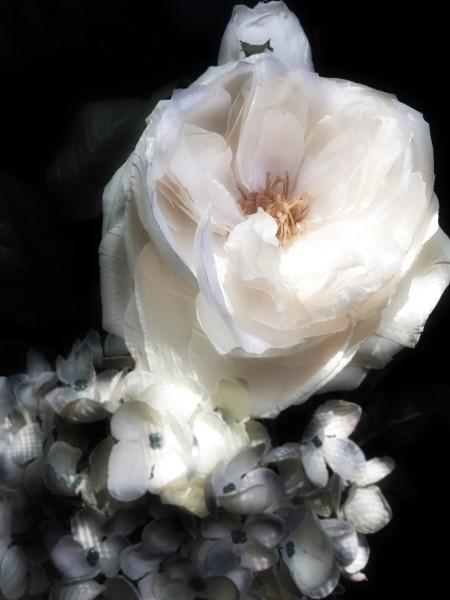 ORL-8470 Floral Inspiration 24