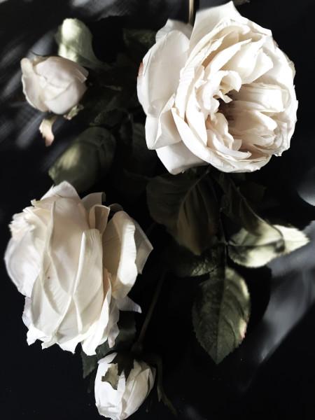 ORL-8472 Floral Inspiration 26