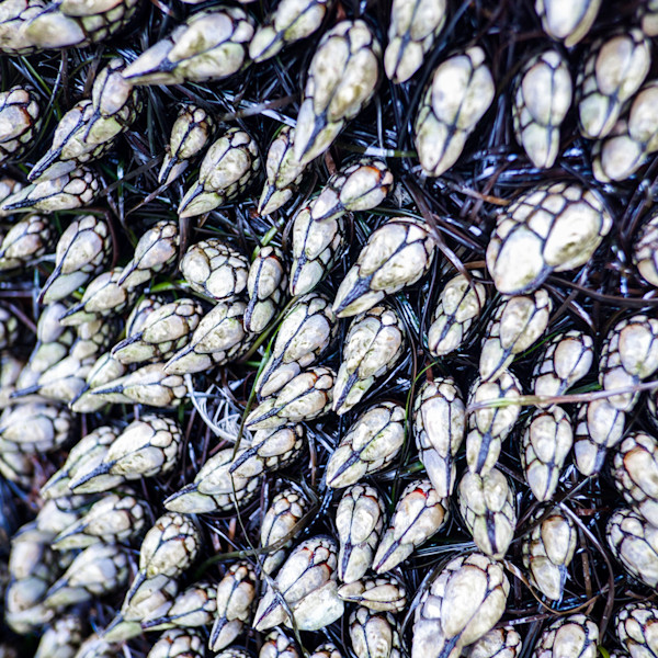 San Diego, California, mussels