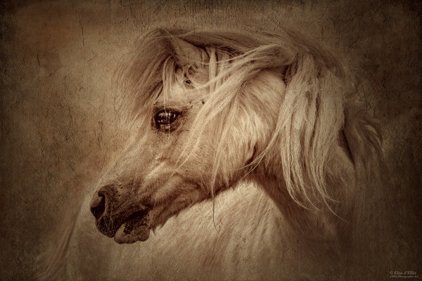 Gypsy Heart Friend, d'Ellis Photographic Art photographs, Elsa